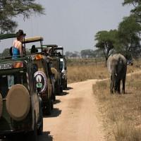 Safari Tours in Northern Tanzania